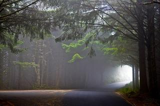 forrest with sun rays through the fog